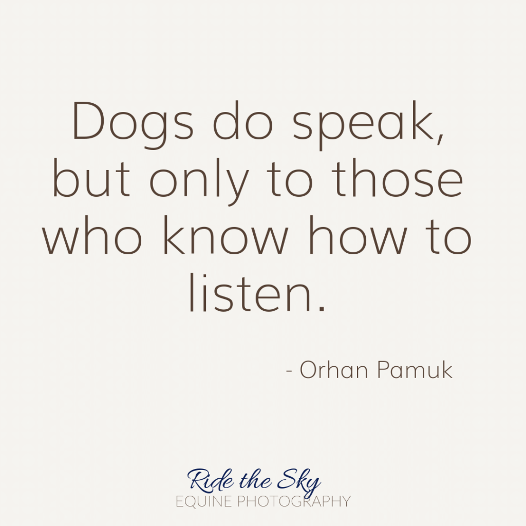 Orhan Pamuk Dog Quote