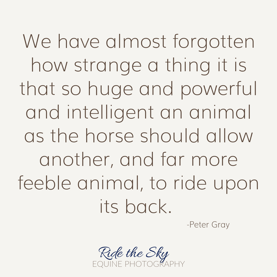 Horse Quote by Peter Gray