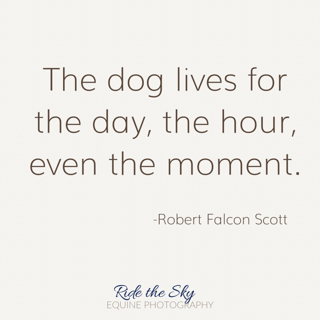 Robert Falcon Scott Dog Quote