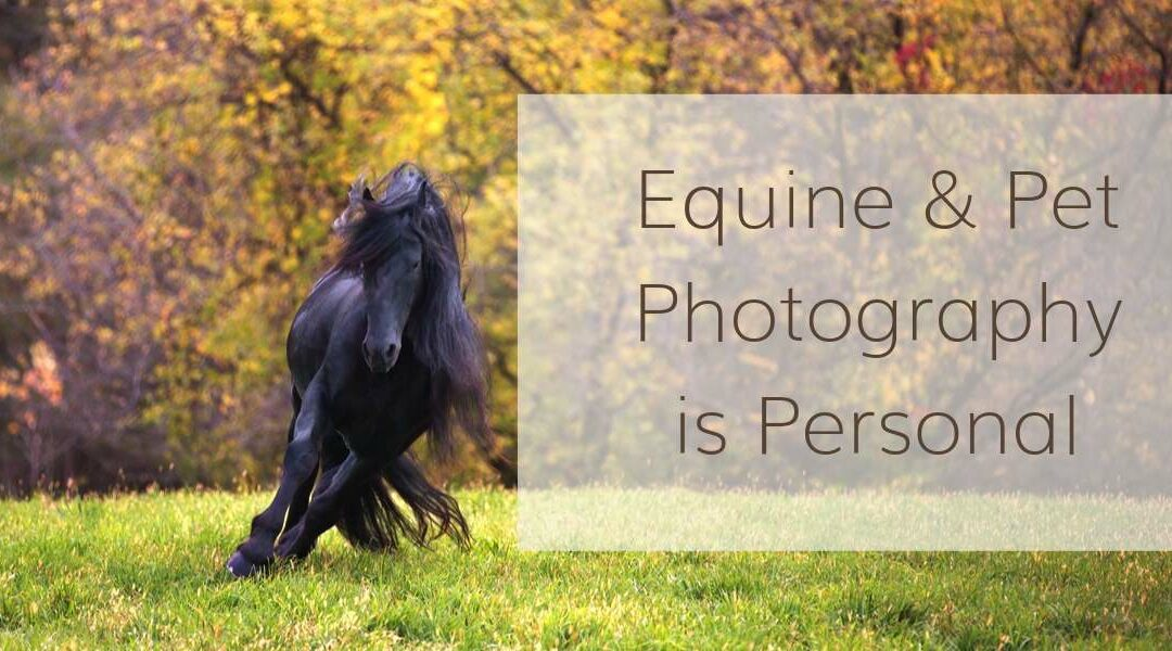 Equine and Pet Photography is Personal