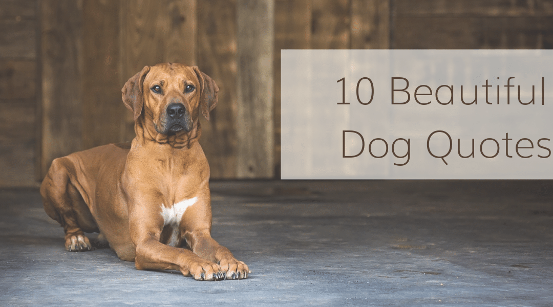 Chattanooga Pet Photography: 10 Beautiful Dog Quotes