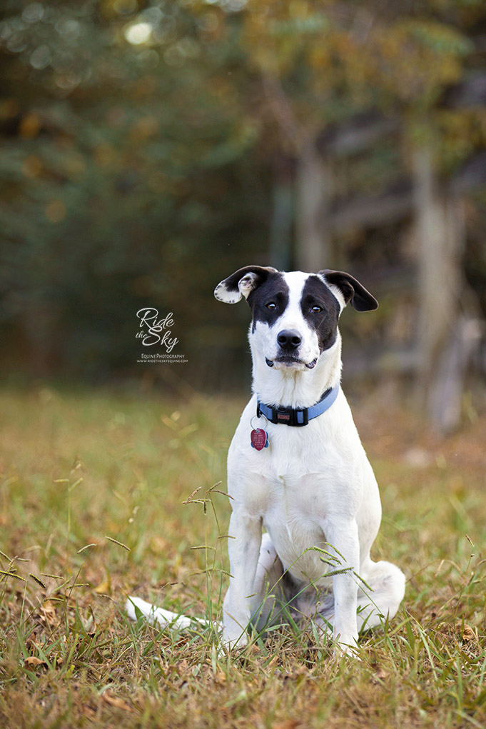 Black and White dog in Field in Chattanooga
