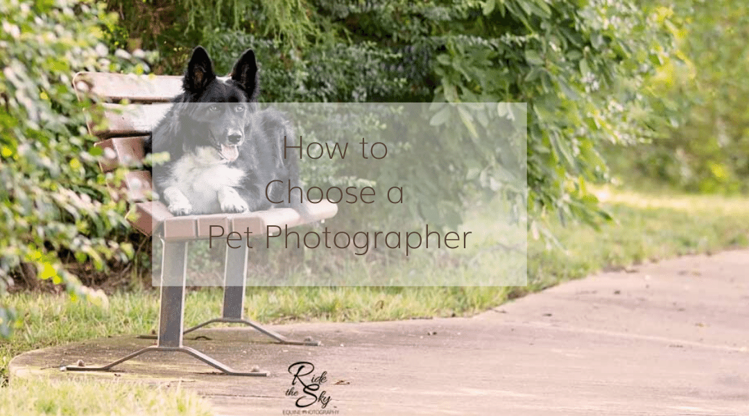 How to Choose a Pet Photographer