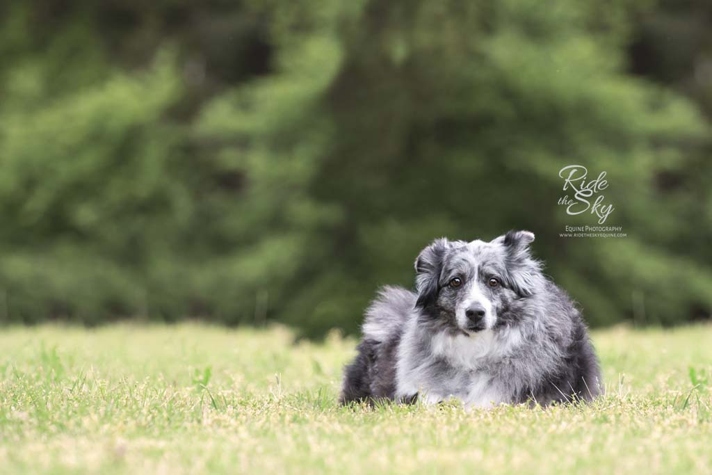 Dog picture in field