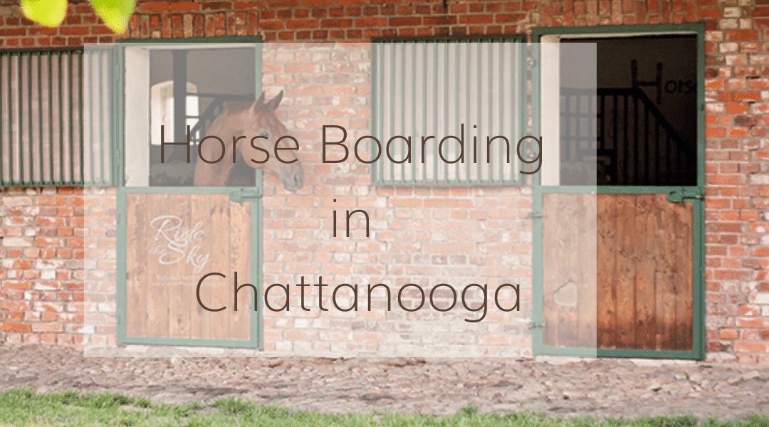 Horse Boarding in the Chattanooga Area