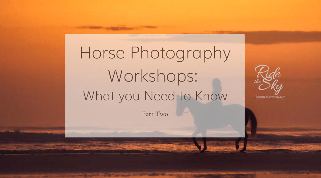 Horse Photography Workshop 2 Feature Image