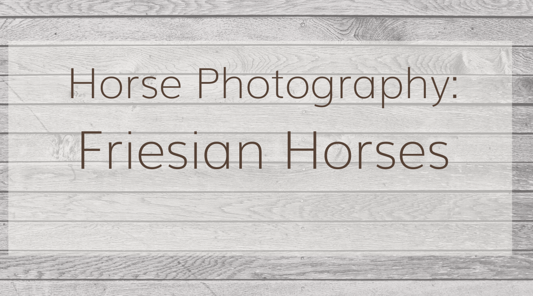 Horse Photography: Friesian Horses