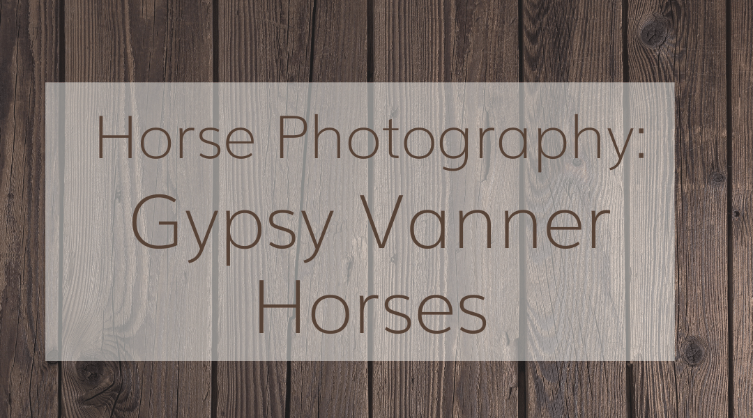 Horse Photography: Gypsy Vanner Horses