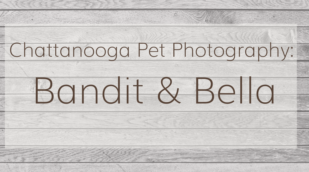 Pet Photography: Bella & Bandit | Nature Park