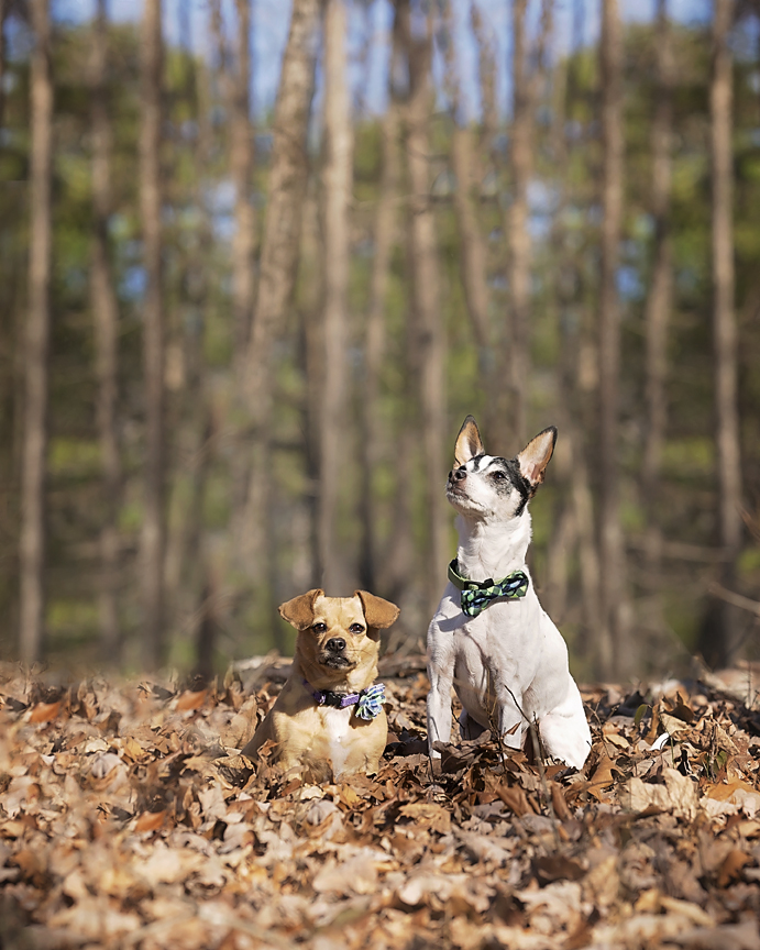 Two dogs photographed at Enterprise South Nature Park in Chattanooga