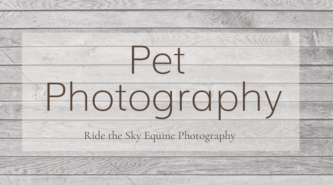 Pet Photography Options