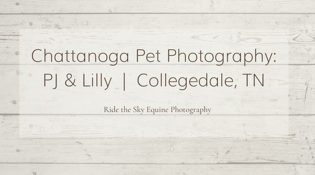 Pet Photography: Lilly & PJ | Collegedale, TN