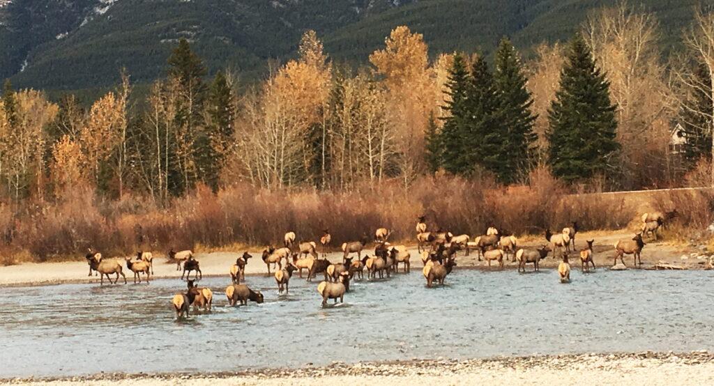 Elk-Header