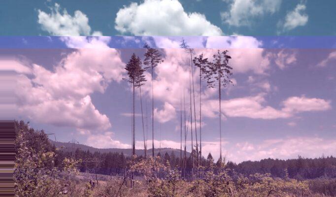 trees washington