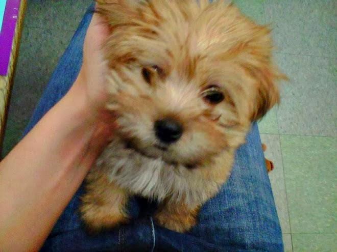 rambo-the-puppy-2