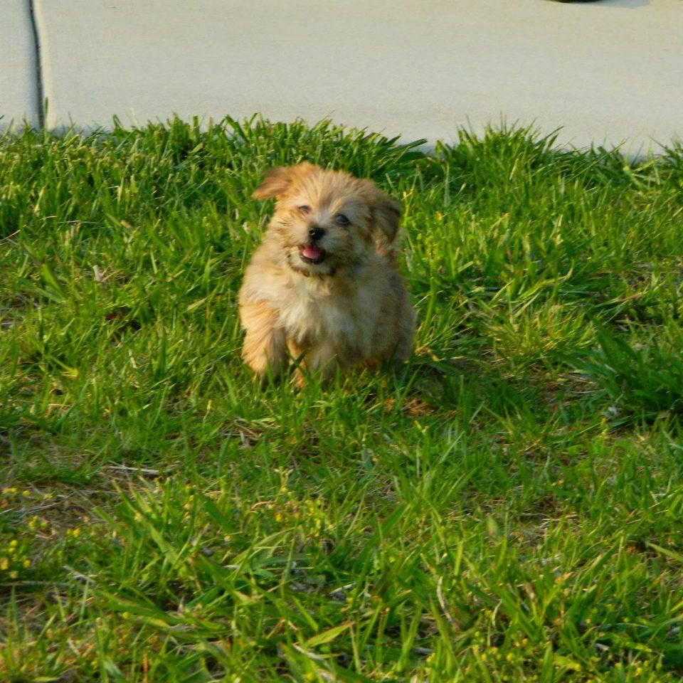 rambo-the-puppy-7