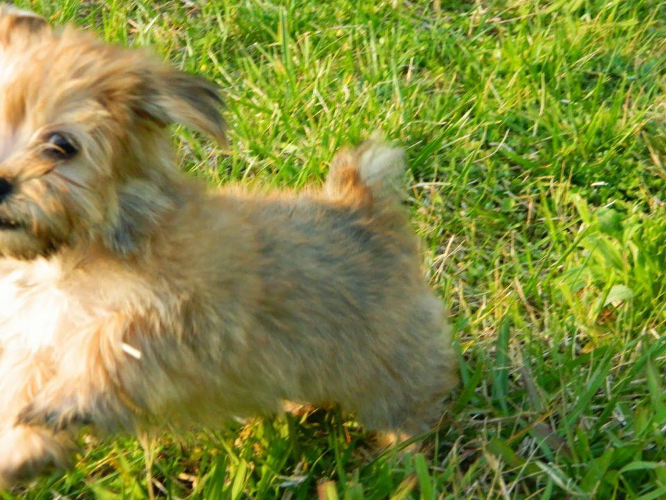 rambo-the-puppy-6