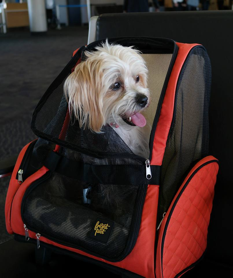 tips-for-traveling-with-your-dog