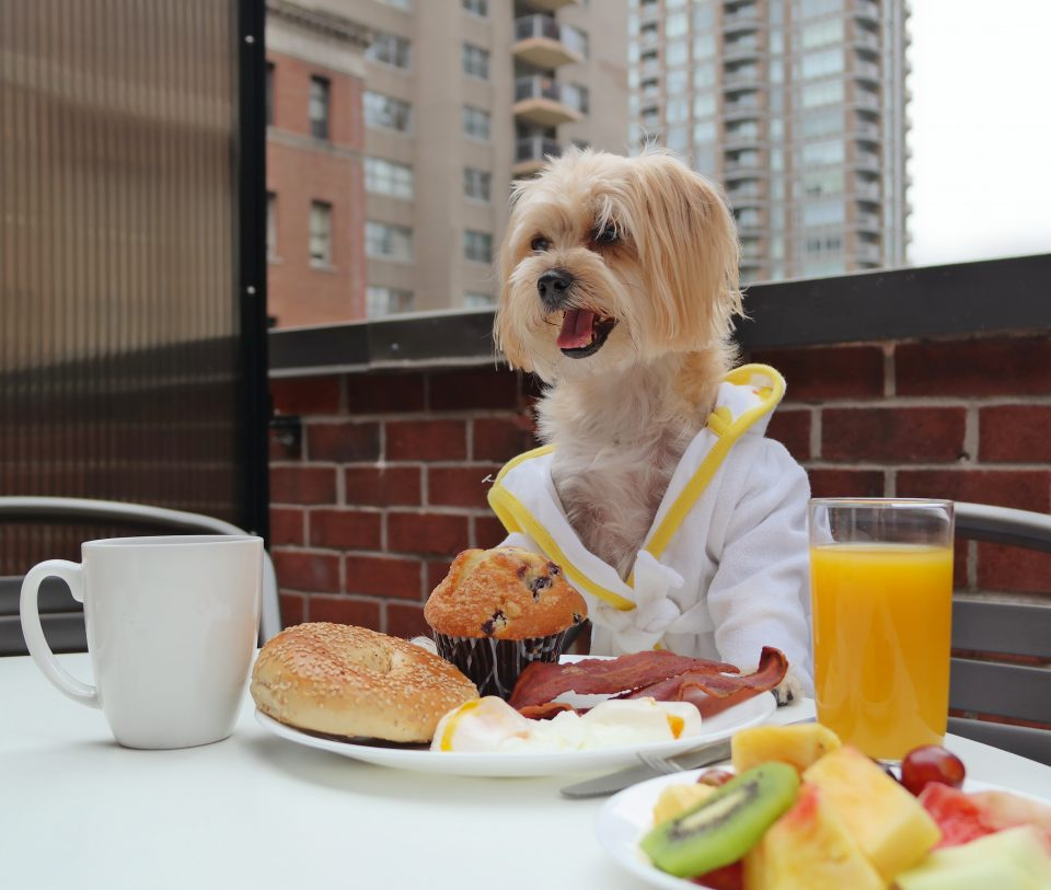 dog-friendly-hotels-2