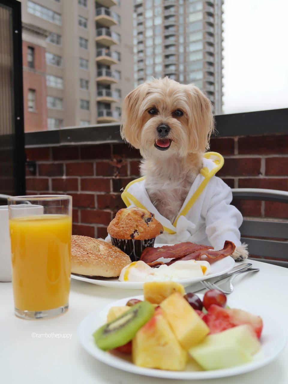 dog-friendly-hotels