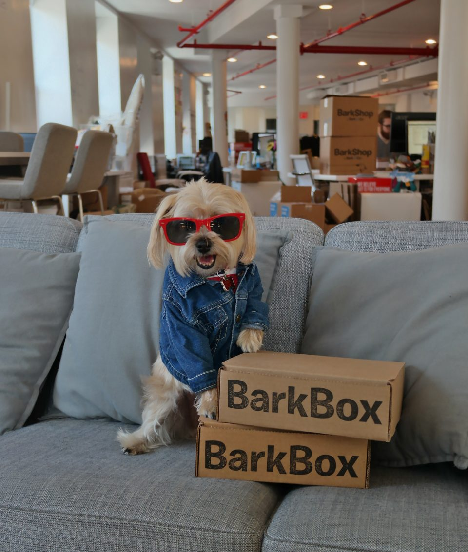 barkbox-hq
