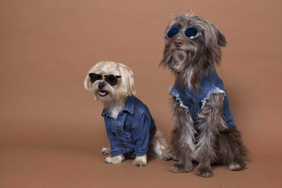 the-dog-styler-3