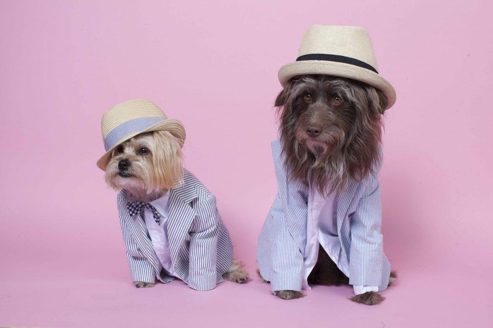 the-dog-styler-2