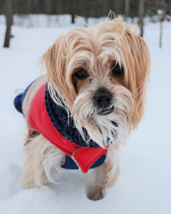 keeping-pets-safe-during-winter-weather-cold