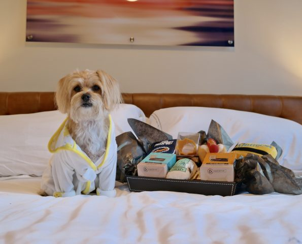 pet-friendly-nyc-viceroy-2