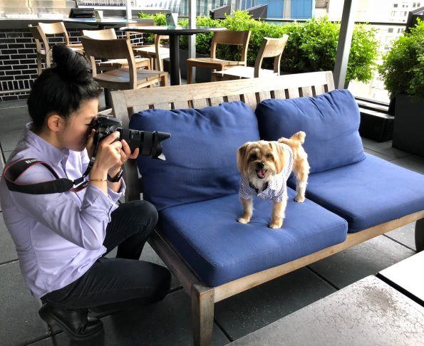pet-friendly-nyc-viceroy-4