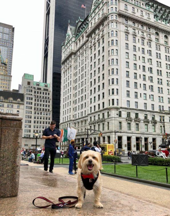 pet-friendly-nyc-near-central-park