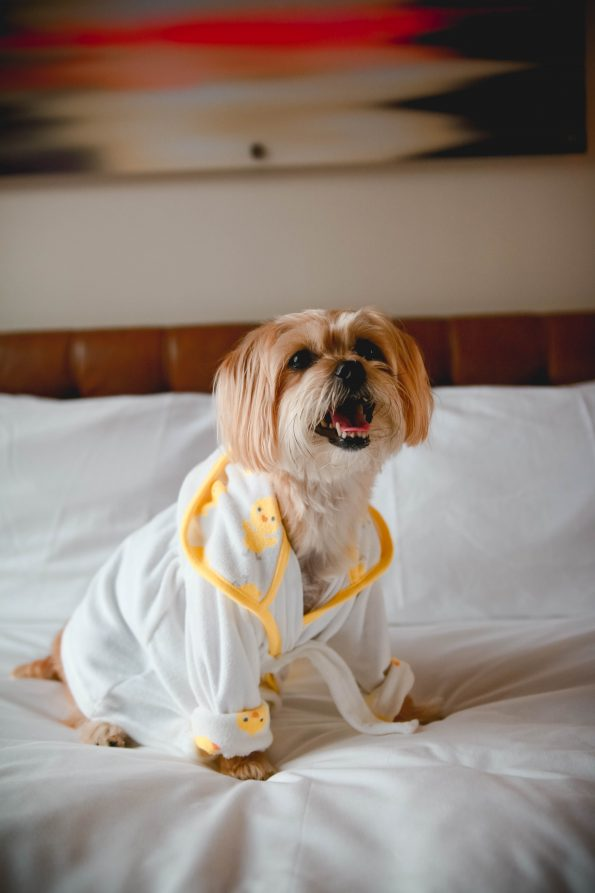 pet-friendly-nyc-viceroy-5