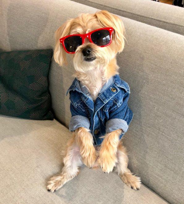 pet-friendly-nyc-dog-agency-4