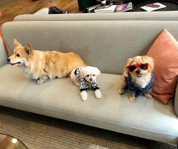 pet-friendly-nyc-dog-agency