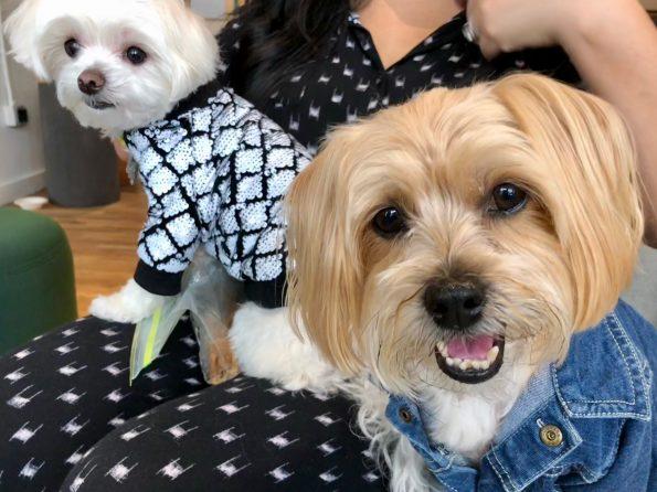 pet-friendly-nyc-dog-agency-5