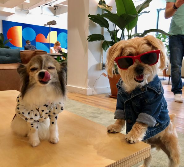 pet-friendly-nyc-dog-agency-6