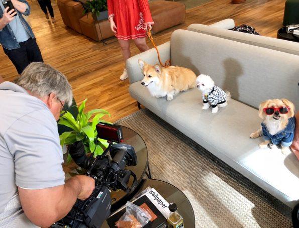 pet-friendly-nyc-dog-agency-2