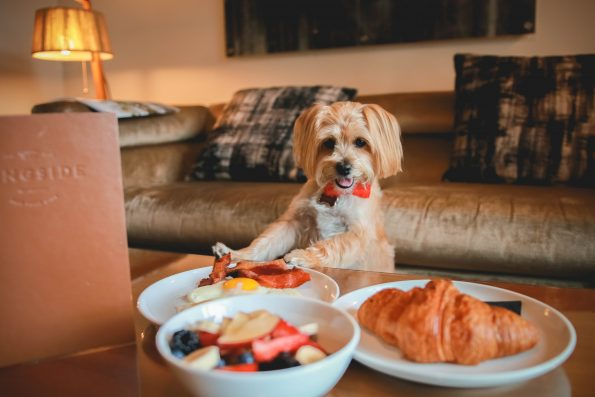 pet-friendly-nyc-viceroy-6