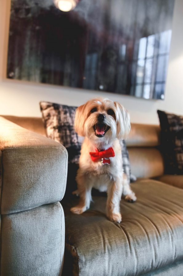 pet-friendly-nyc-viceroy-8