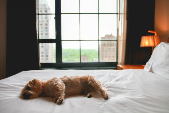 pet-friendly-nyc-viceroy-7