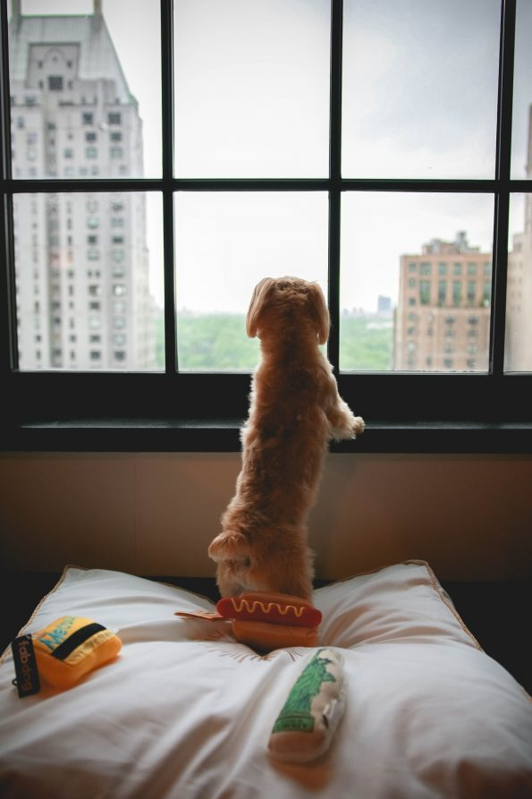 pet-friendly-nyc-viceroy-11