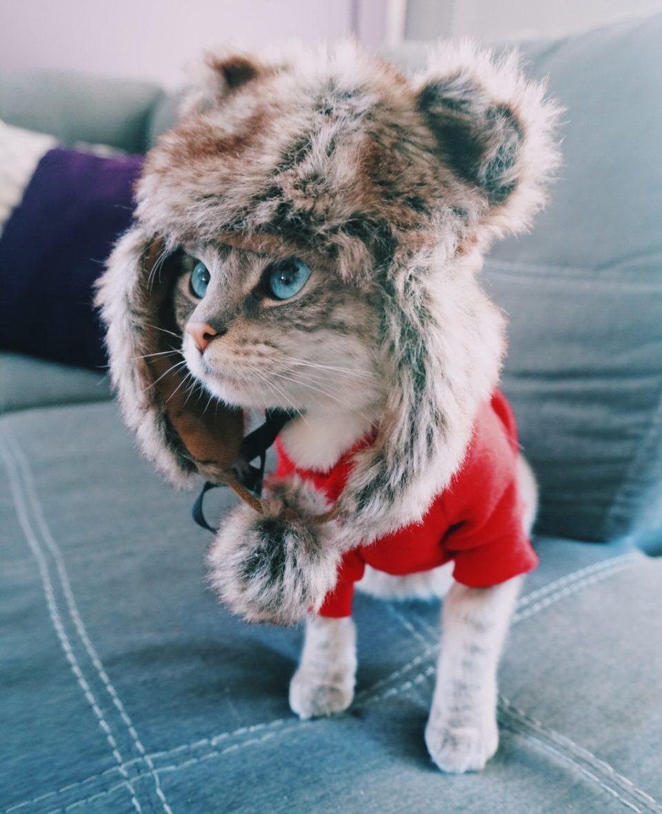 fifi-mcfluffypants-hat