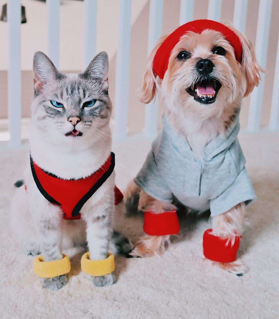 fifi-mcfluffypants-rambo-the-puppy