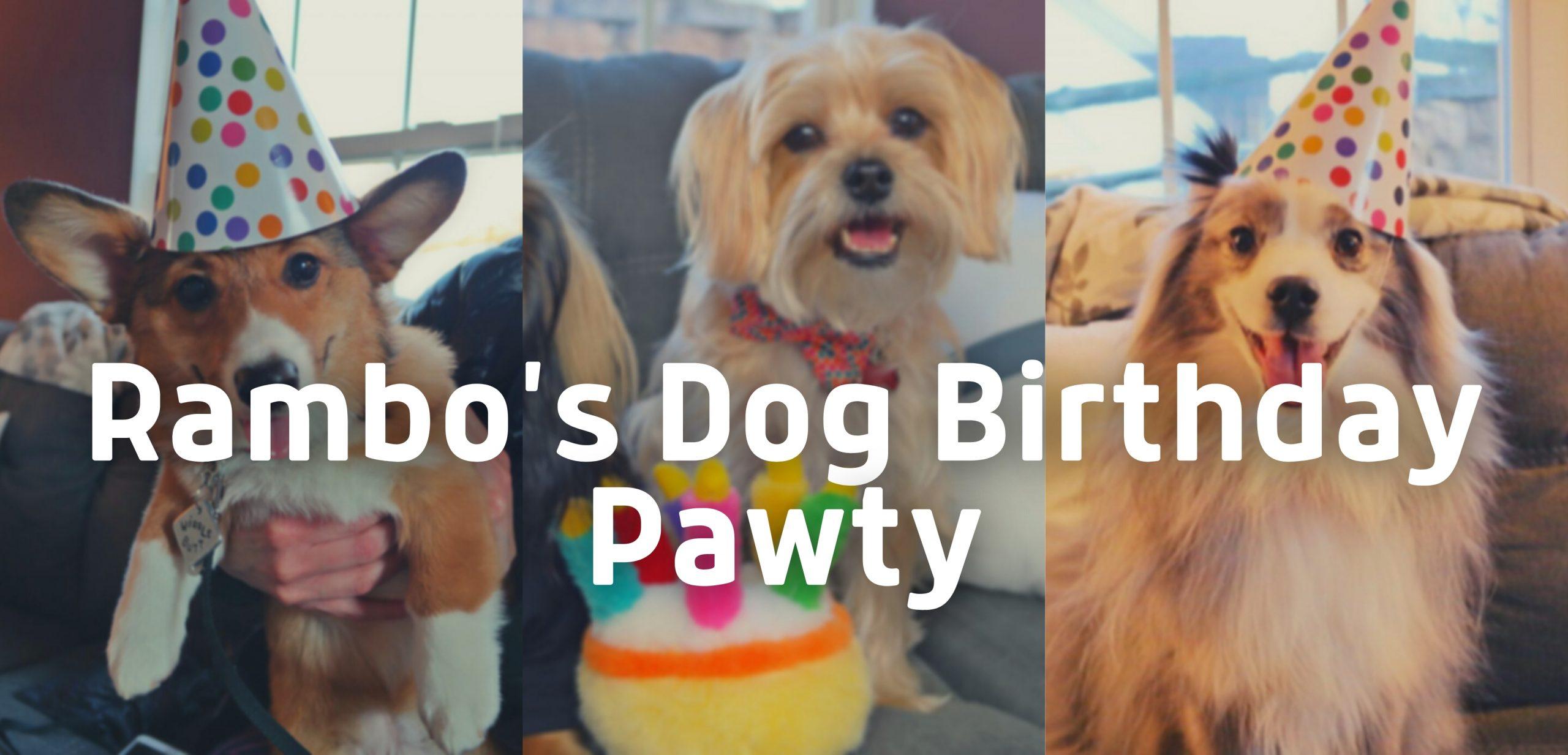 Rambo's Dog Birthday Party!