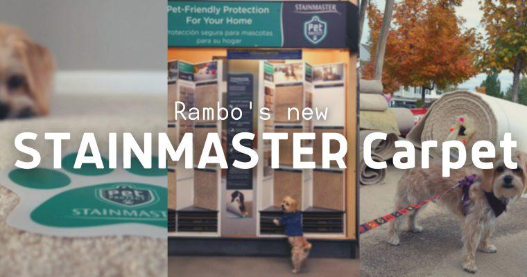 Rambo's New STAINMASTER Carpet