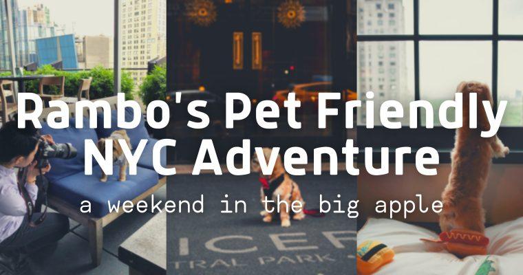 Rambo's Pet Friendly NYC Adventure
