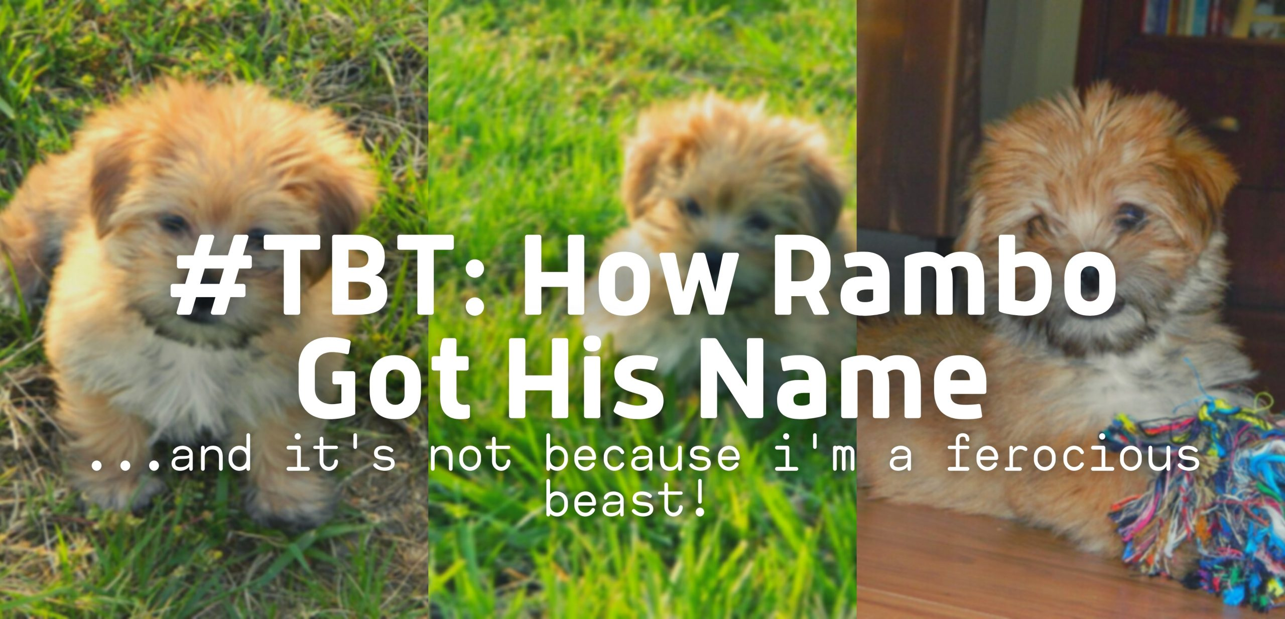 #TBT: How Rambo the Puppy Got His Name