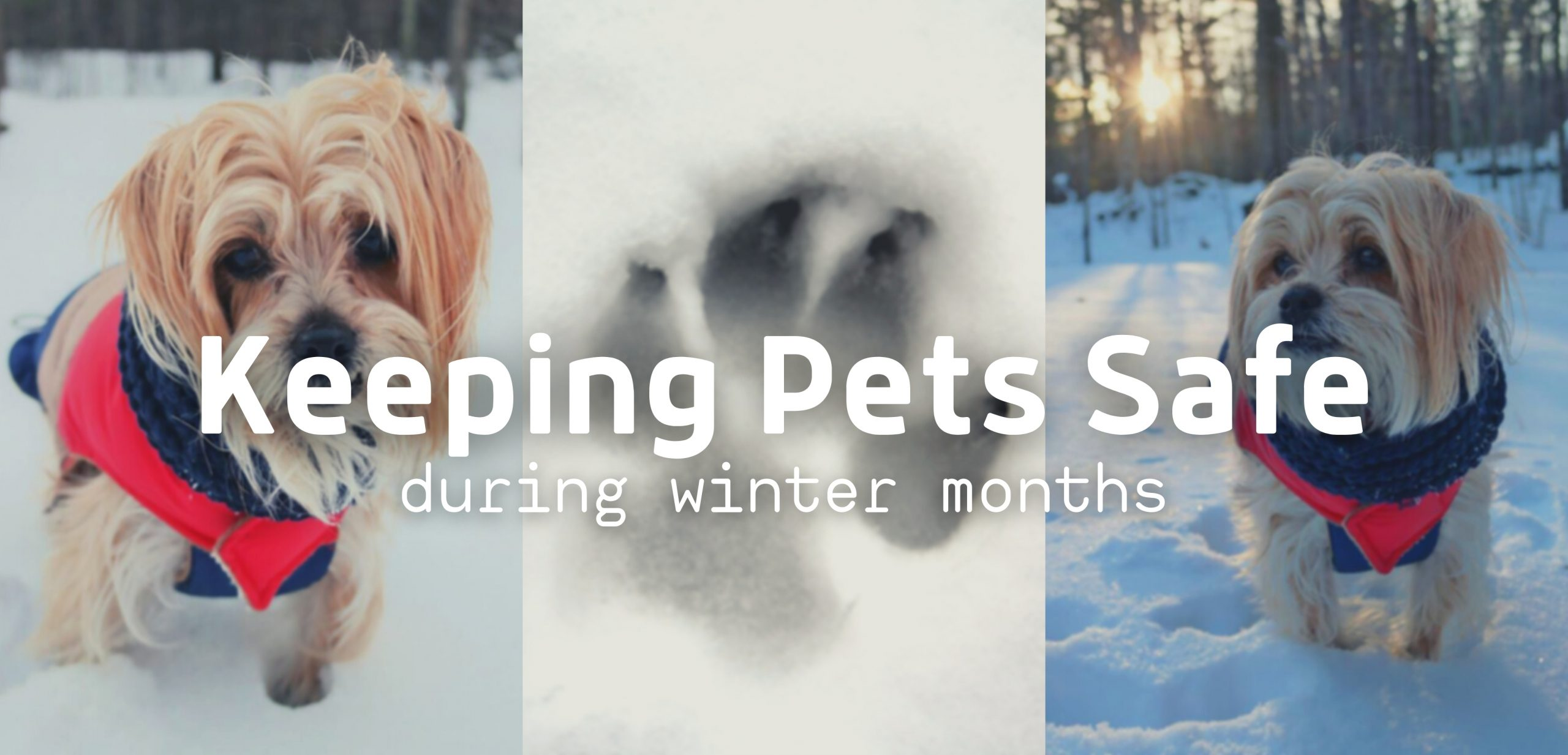 Keeping Pets Safe During Winter Months