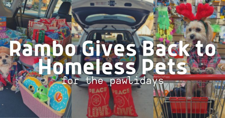 Rambo Gives Back to Homeless Pets for the Pawlidays