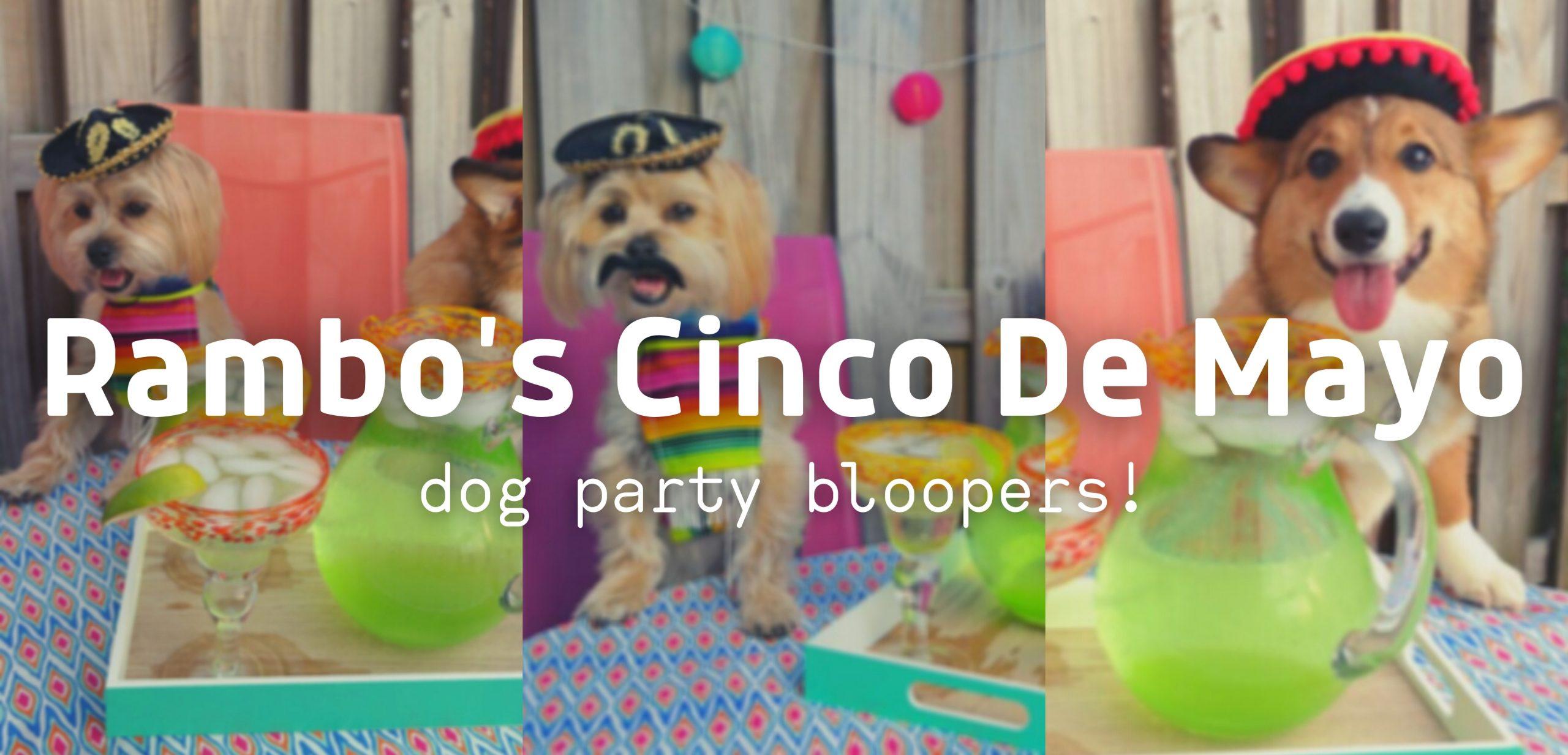 Rambo's Cinco de Mayo Dog Party BLOOPERS!